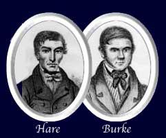 buke-hare